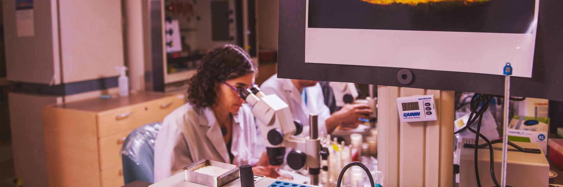 A reseacher using a confocal microscope.